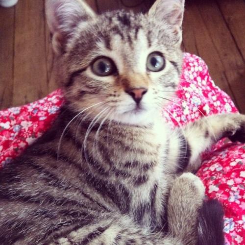 Moga the Cat
